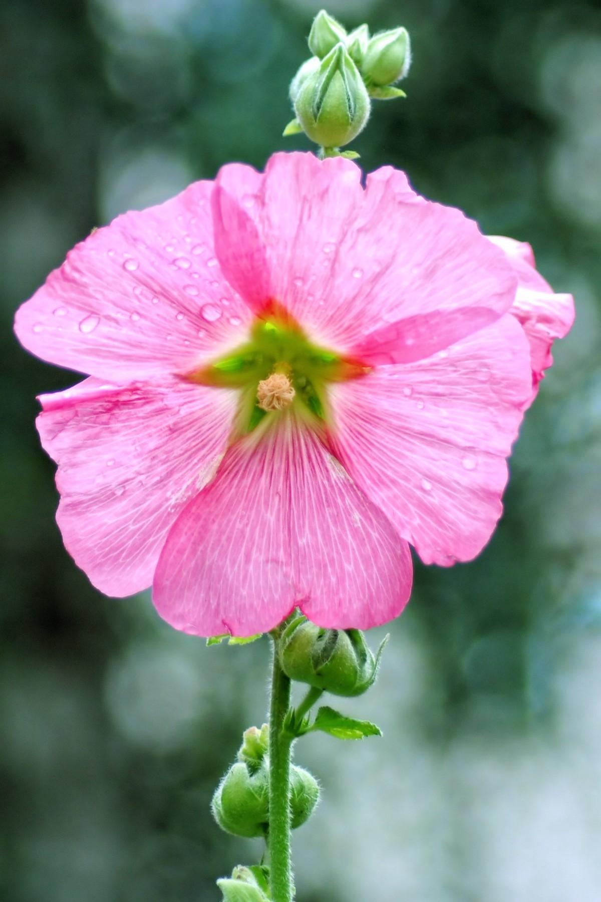 просееваем муку, цветы до слез фото оказалось