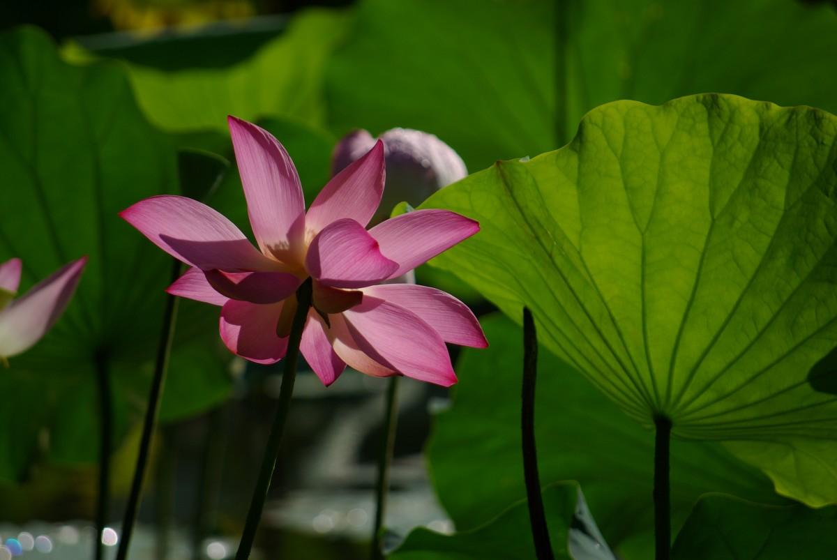 картинки про растениями