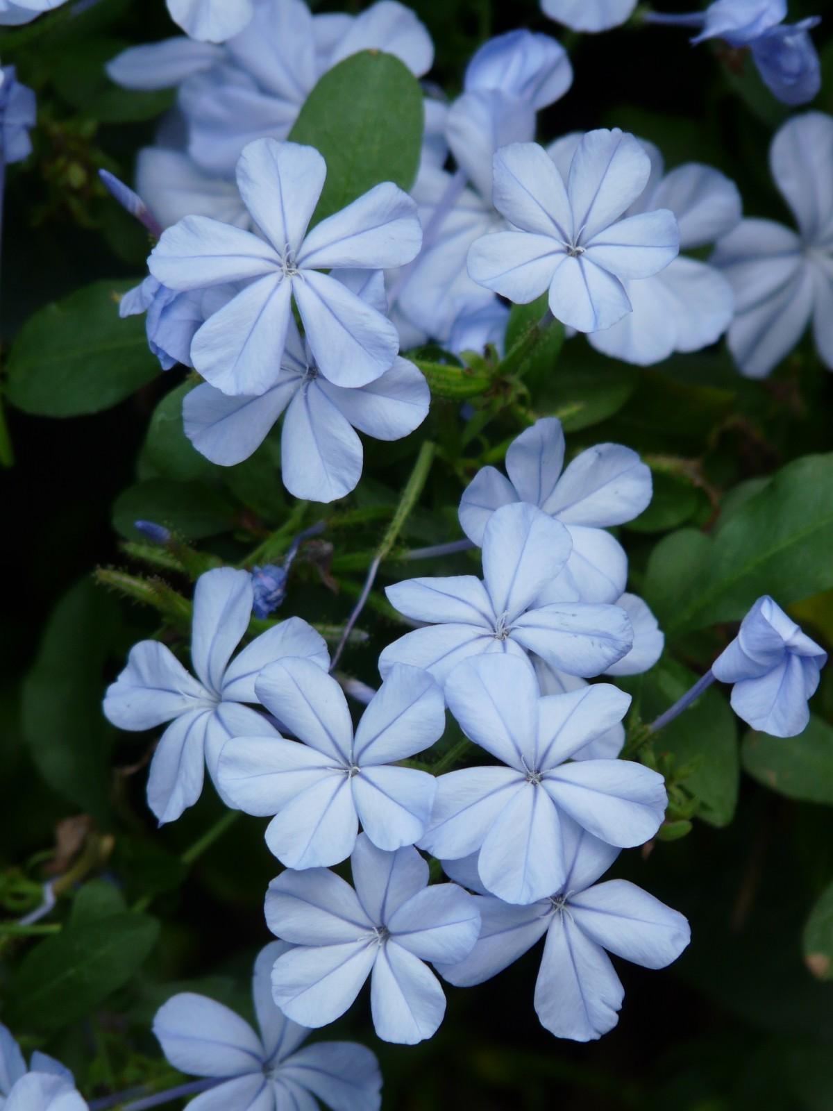 Immagini belle natura fiorire petalo botanica for Fiori ornamentali