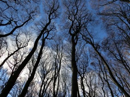 paysage,arbre,la nature,forêt,branche,neige