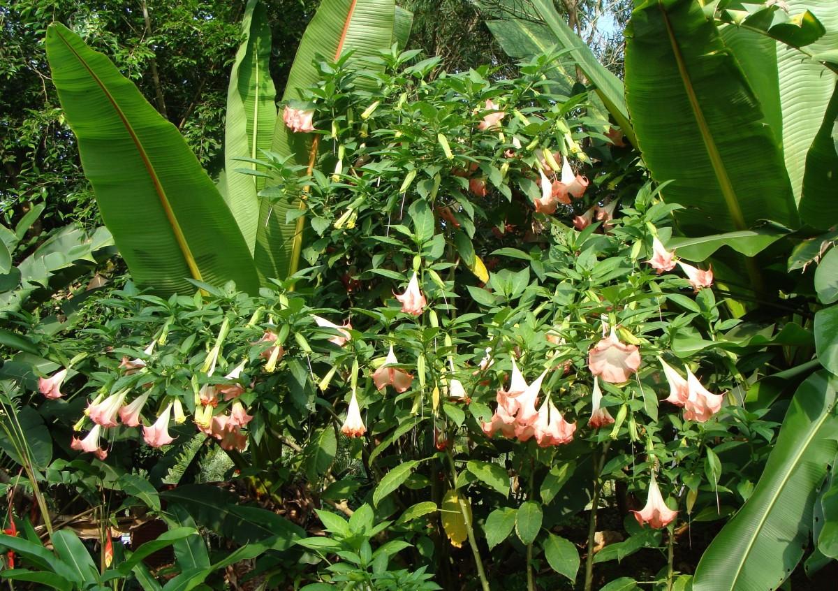 Images gratuites feuille fleur jungle botanique for Plante 7 feuilles