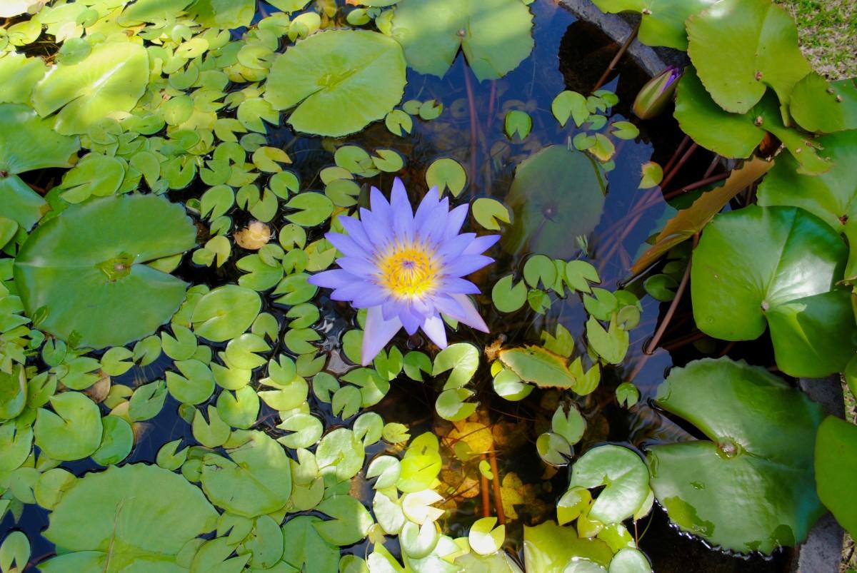 космическая водные растения средней полосы россии фото горный институт