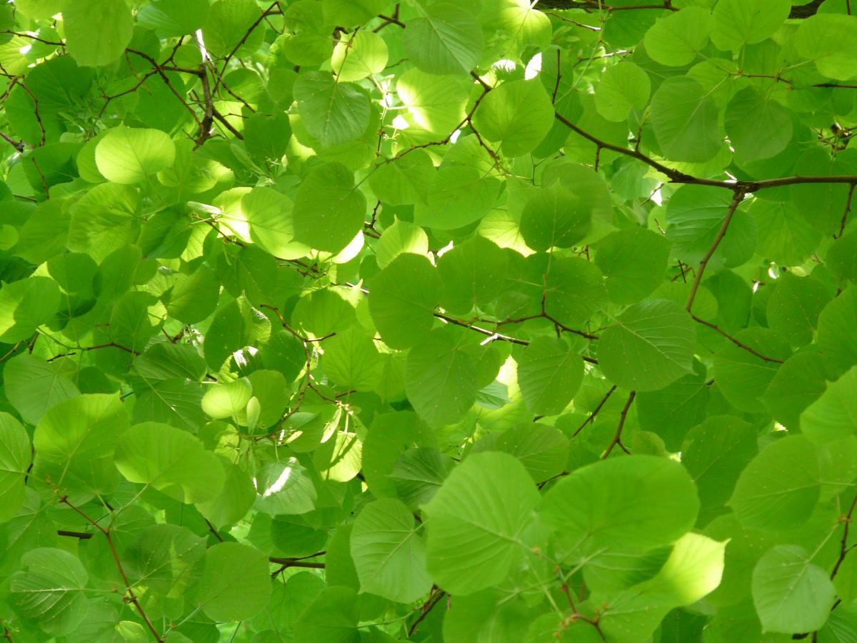 Images gratuites la nature livre feuille fleur t for Couverture plante hiver