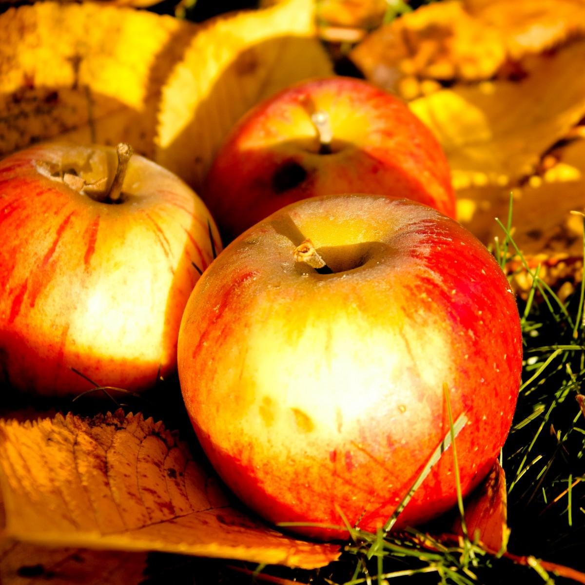 Картинки яблок и грибов