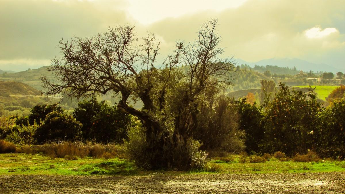 Free Images Landscape Tree Forest Horizon Marsh
