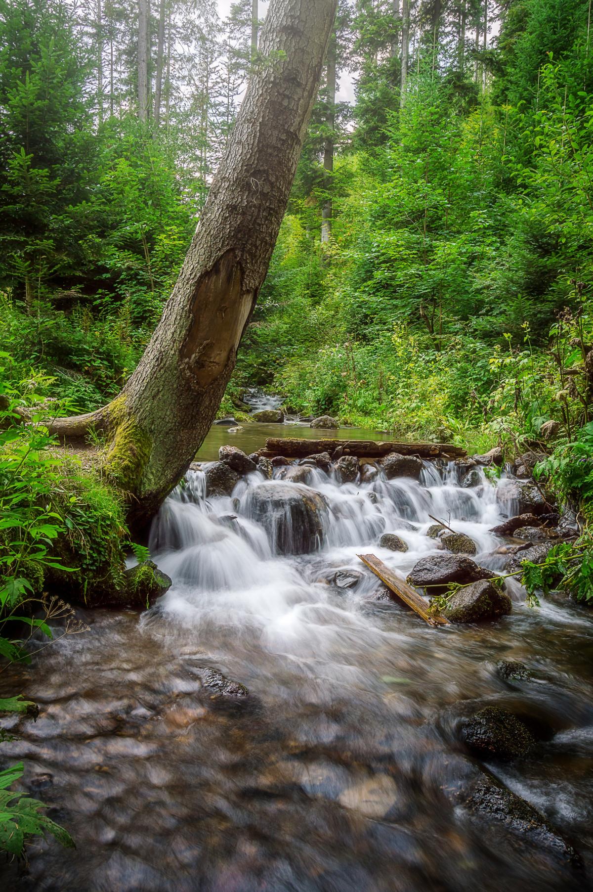 images gratuites paysage arbre eau la nature cascade r gion sauvage rivi re vall e. Black Bedroom Furniture Sets. Home Design Ideas