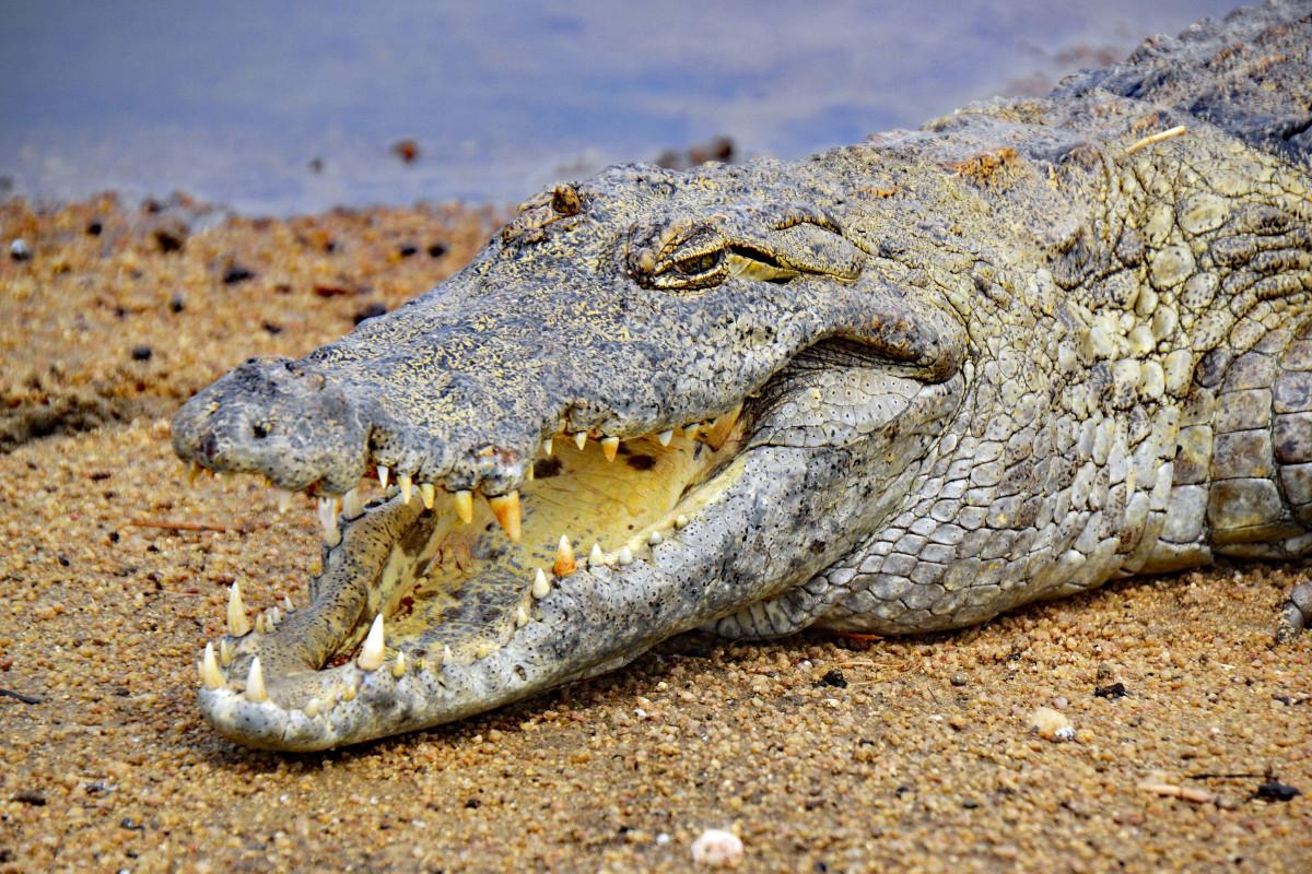 Reptiles-animales-en-constante-evolucion