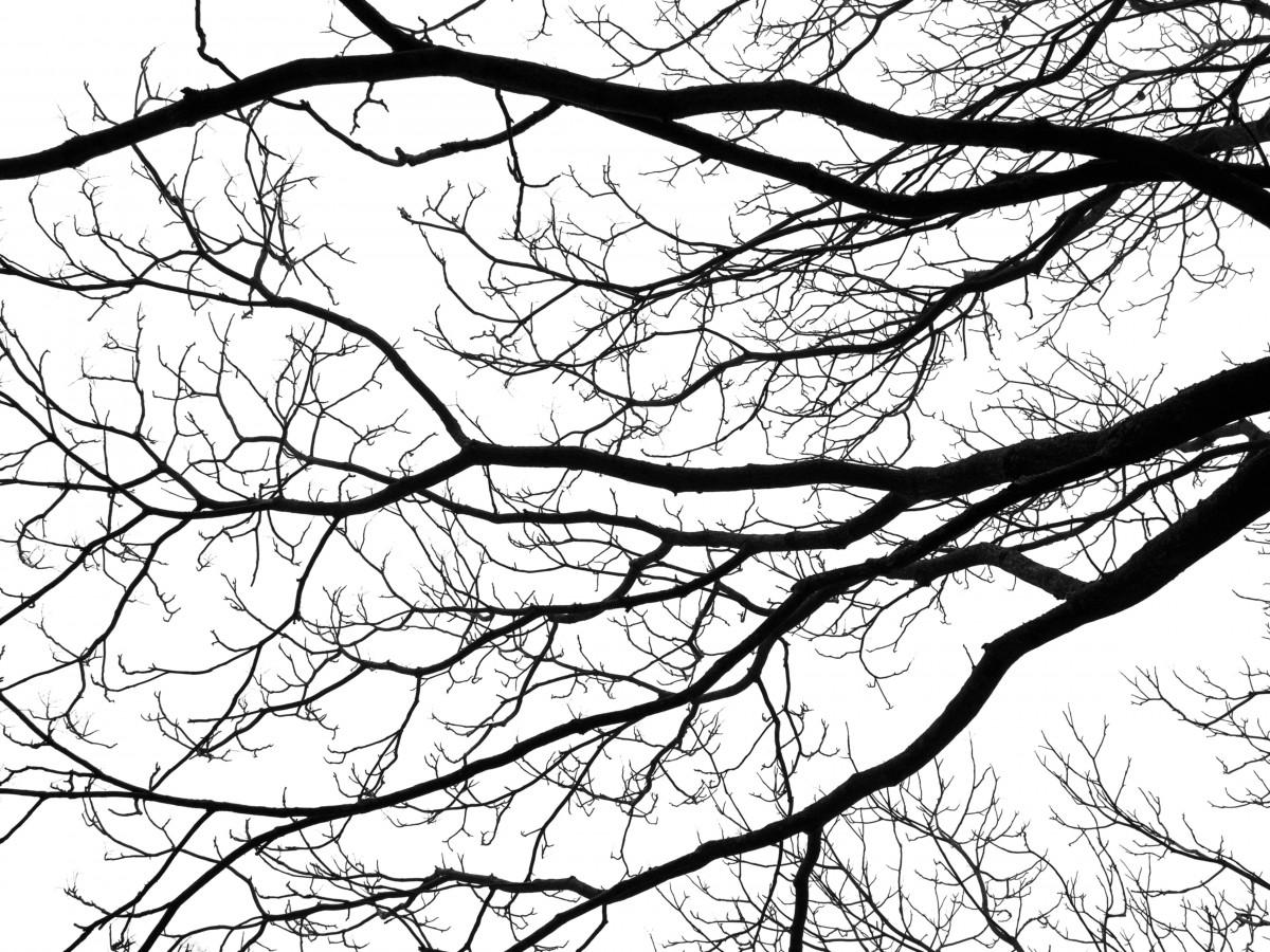 Для, картинки ветки дерева