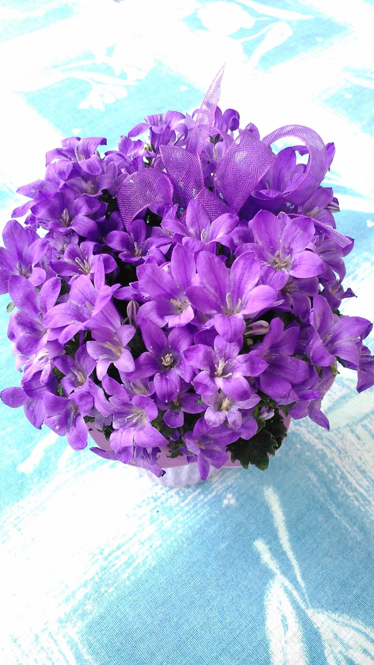 Banco de imagens plantar luz solar flor p tala flora - Cortar hierba alta ...