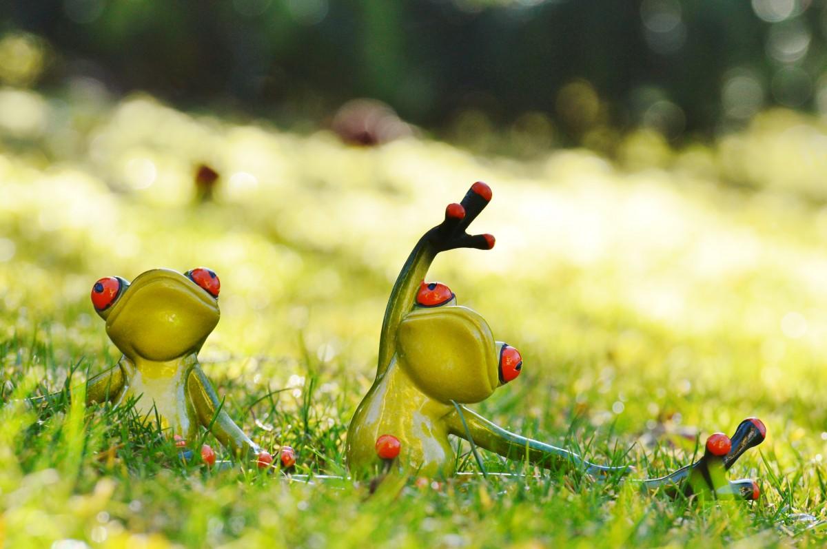 Dyson birds and frogs pdf ремонт щетка дайсон