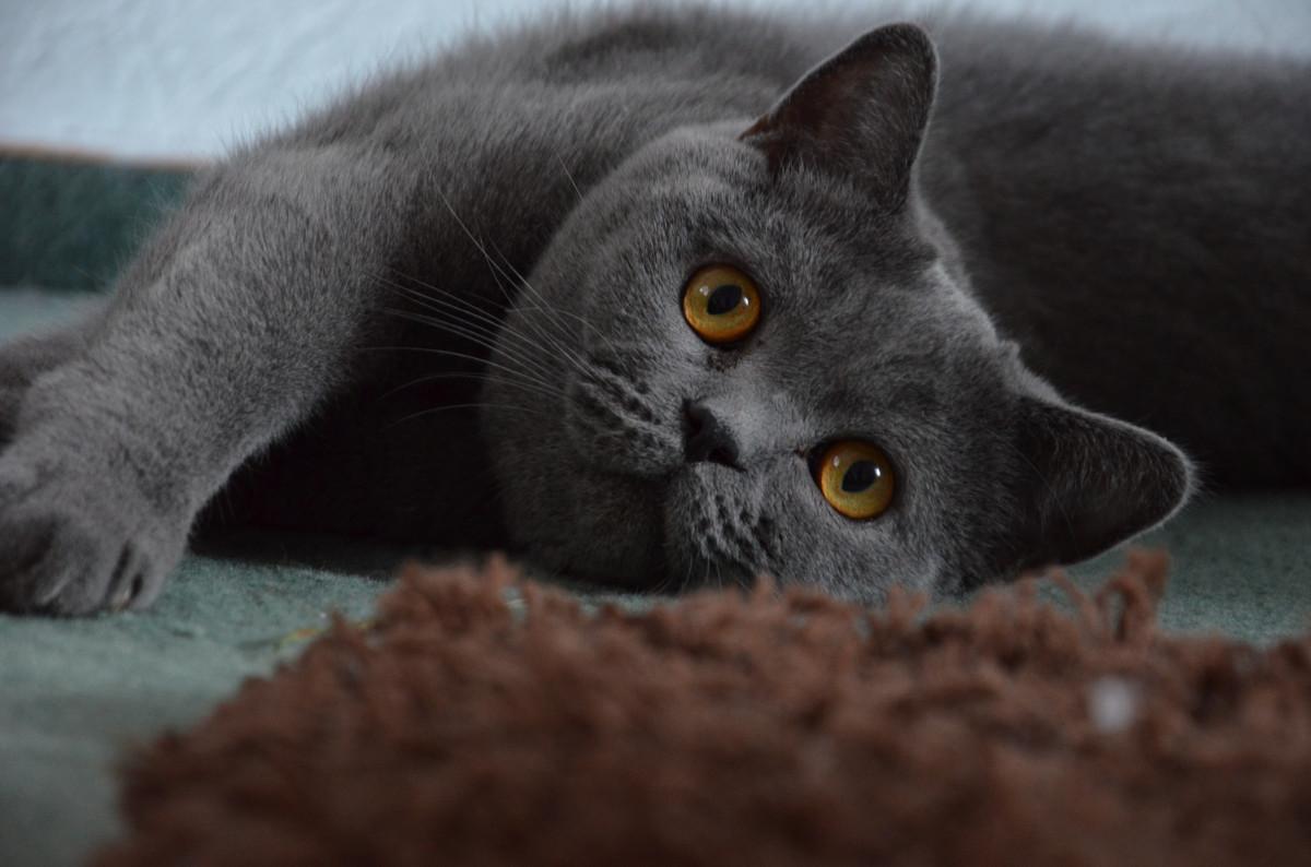 Free black and white sweet cute pet kitten black cat