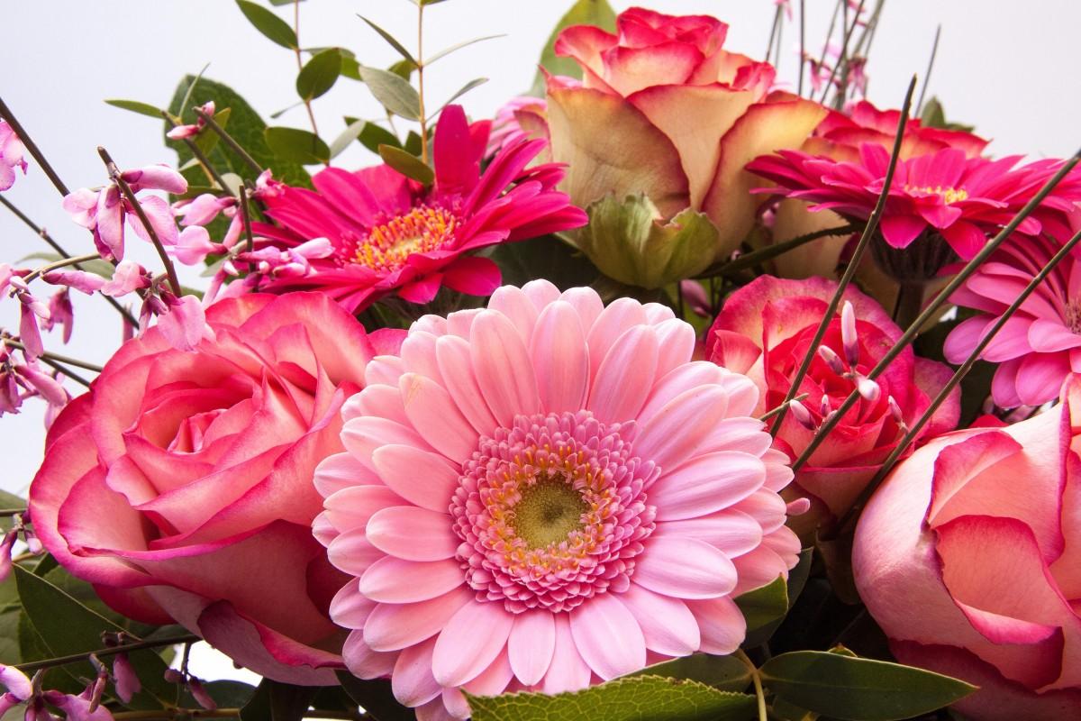 Стену крутые, картинки с днем рождения женщине цветы герберы