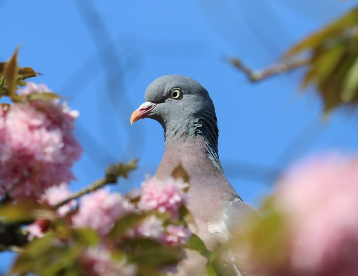 Картинки с изображением голубей