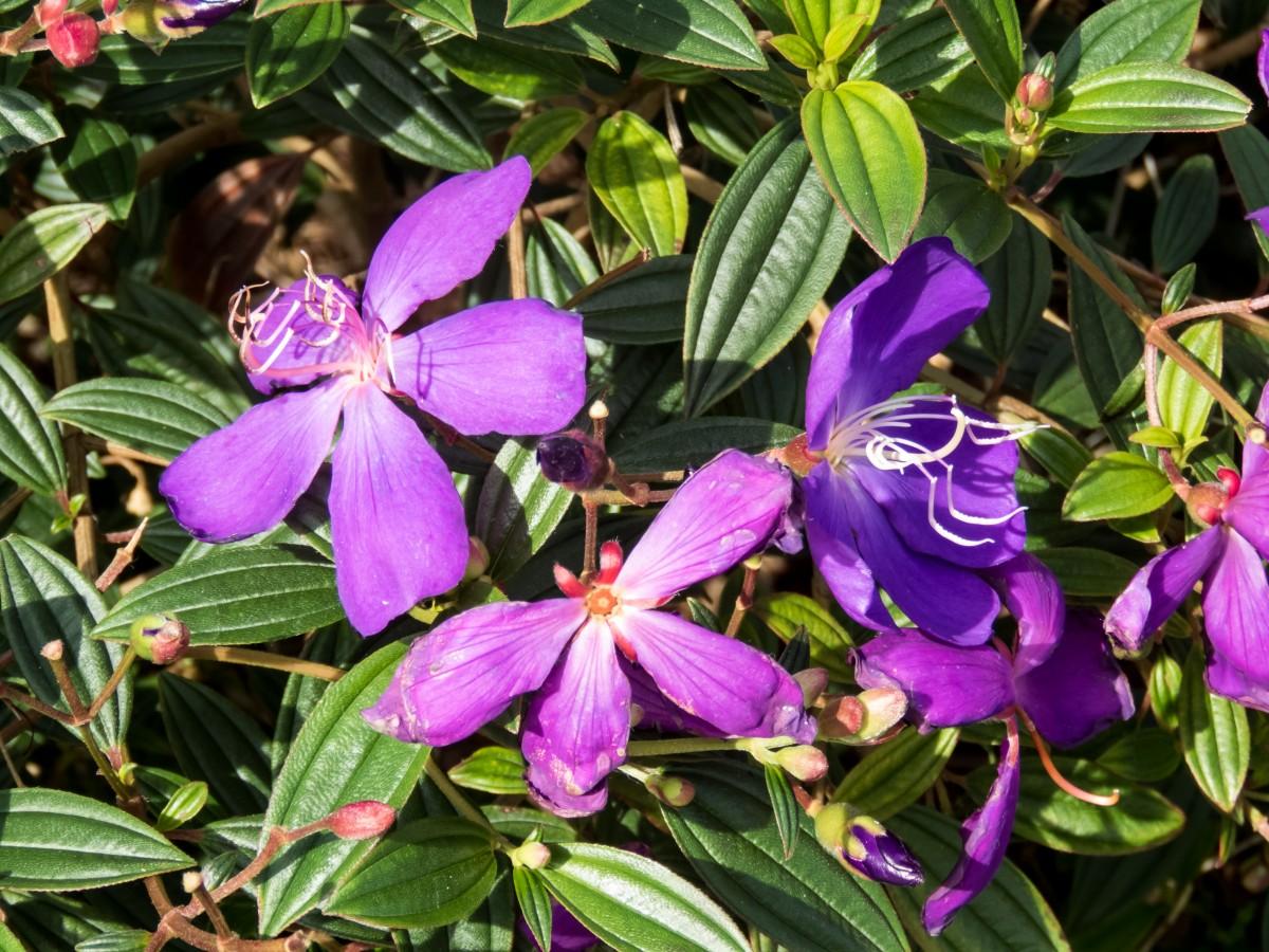 Free images nature outdoor stem flower purple botany flora nature outdoor plant stem flower purple botany flora wildflower flowers stalk leaves publicdomain petals shrub violet mightylinksfo