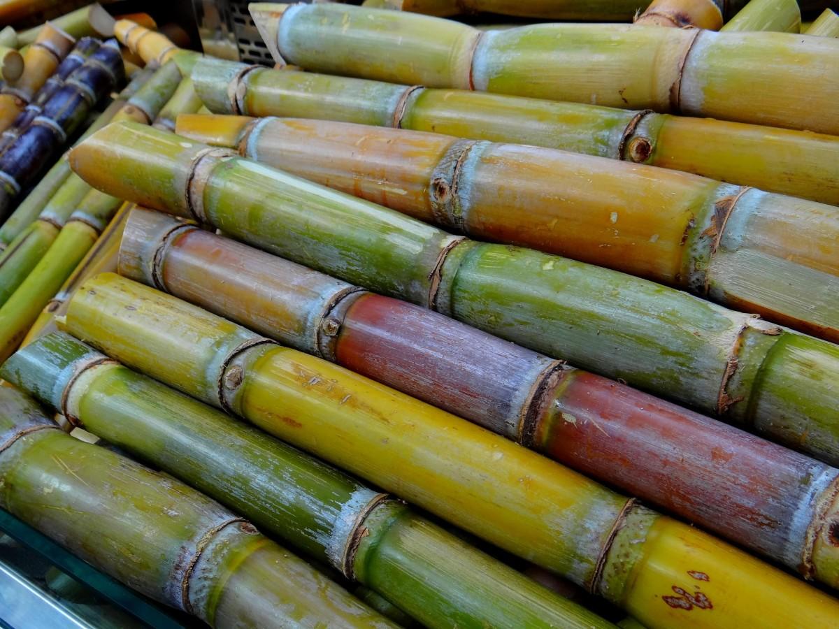 aliments vert produire surgir agriculture bambou réglisse stimulant canne à sucre Objet fabriqué par l'homme Récolte de canne à sucre Production de sucre