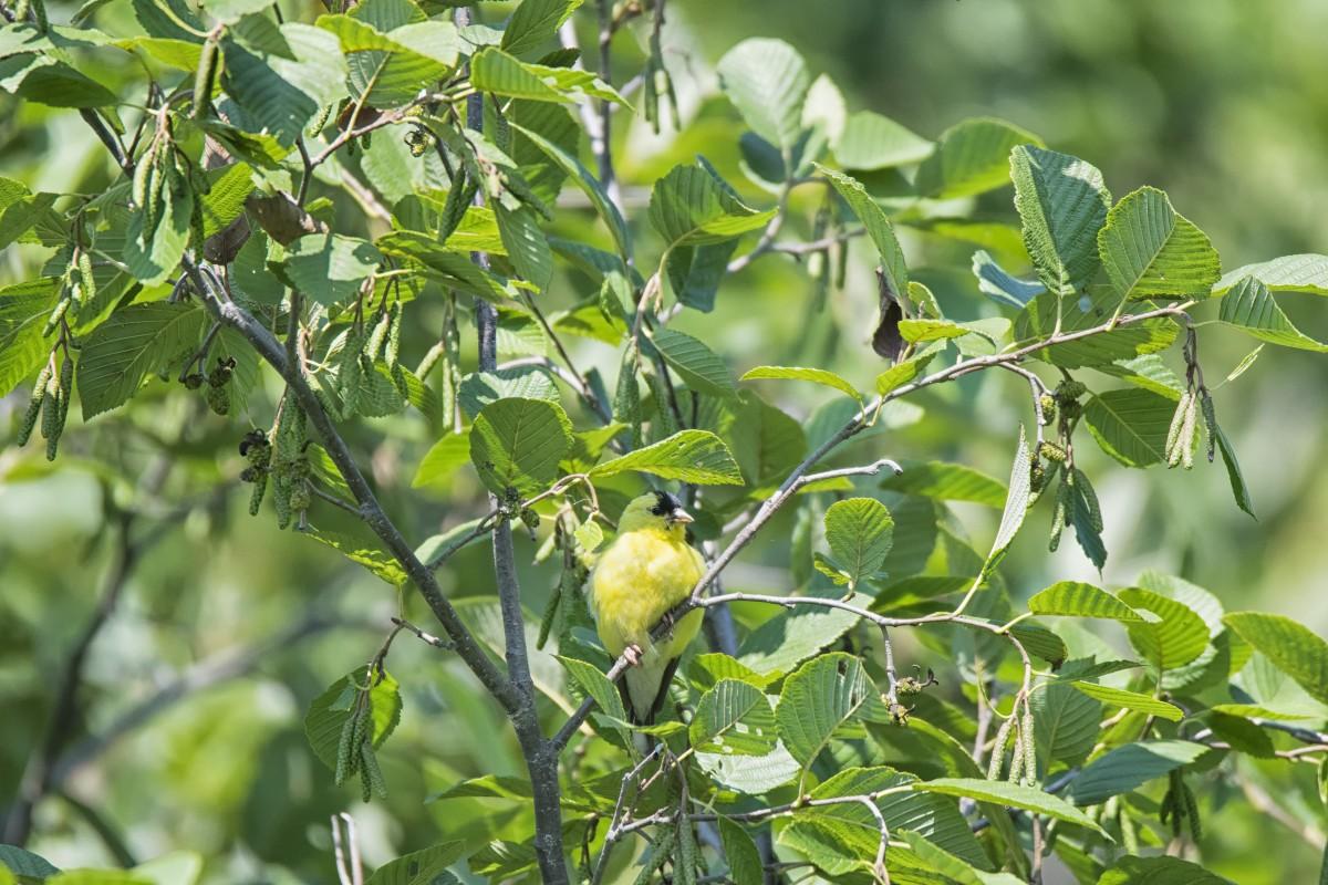 Fotos Gratis : árbol, Rama, Pájaro, Fruta, Hoja, Flor