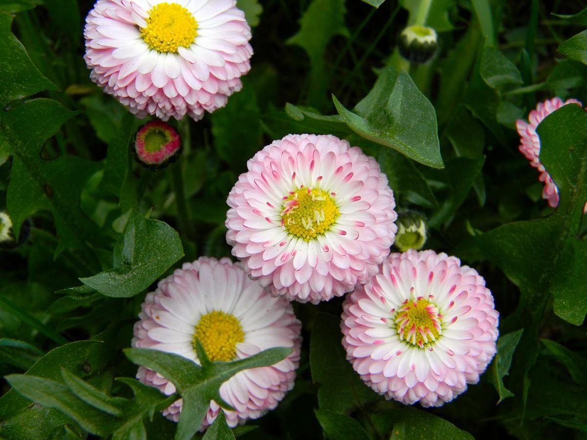 Открытки, картинка садовые цветы