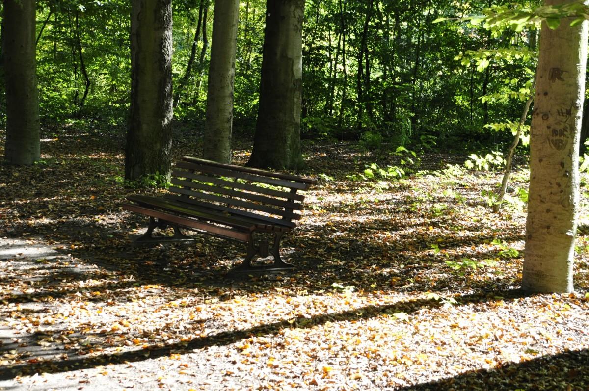 Fotos gratis rbol sendero lluvia oto o cementerio for Cementerio parque jardin del sol pilar