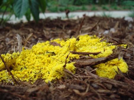 Free Images Track Field Rain Flower Roof Moss Food