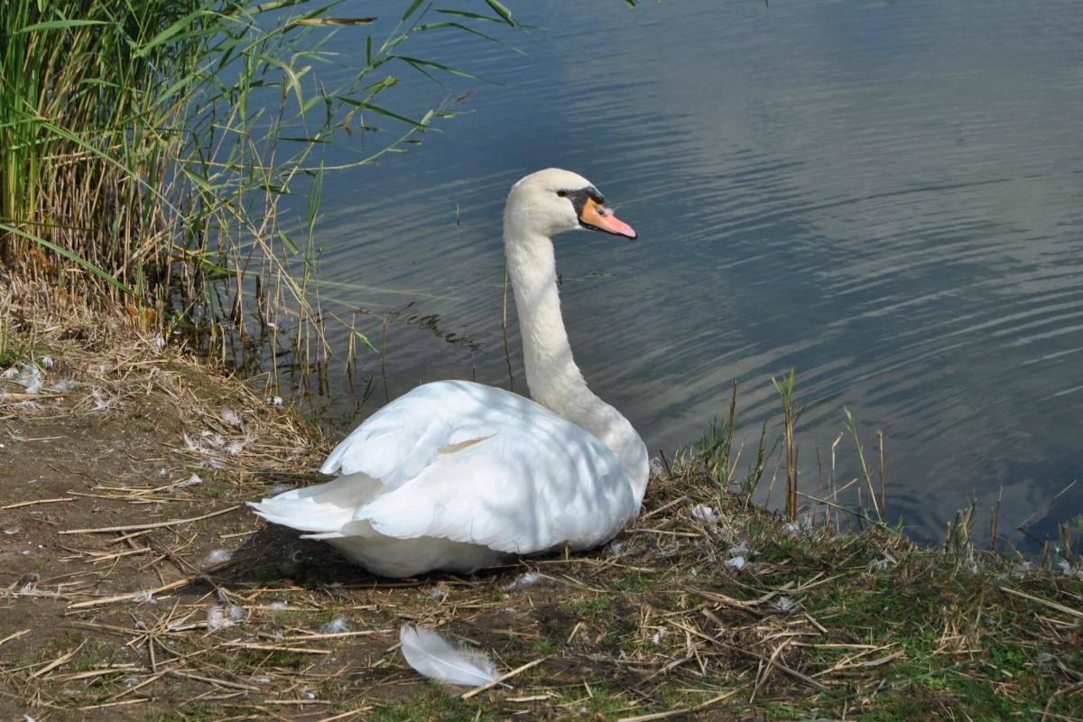fotky z bieleho vtáka