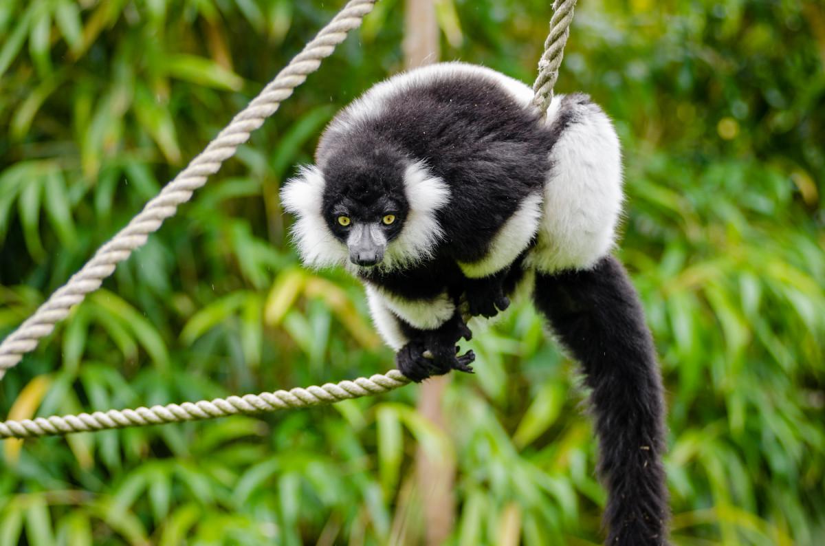 E F Z moreover Barber Pole additionally Lemur Animal Madagascar Zoo also Maxresdefault in addition F Af E A A Fcd Bad A. on nikon d7000