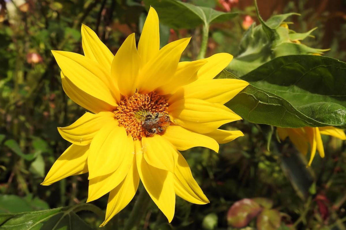 images gratuites fleur p tale floraison botanique. Black Bedroom Furniture Sets. Home Design Ideas