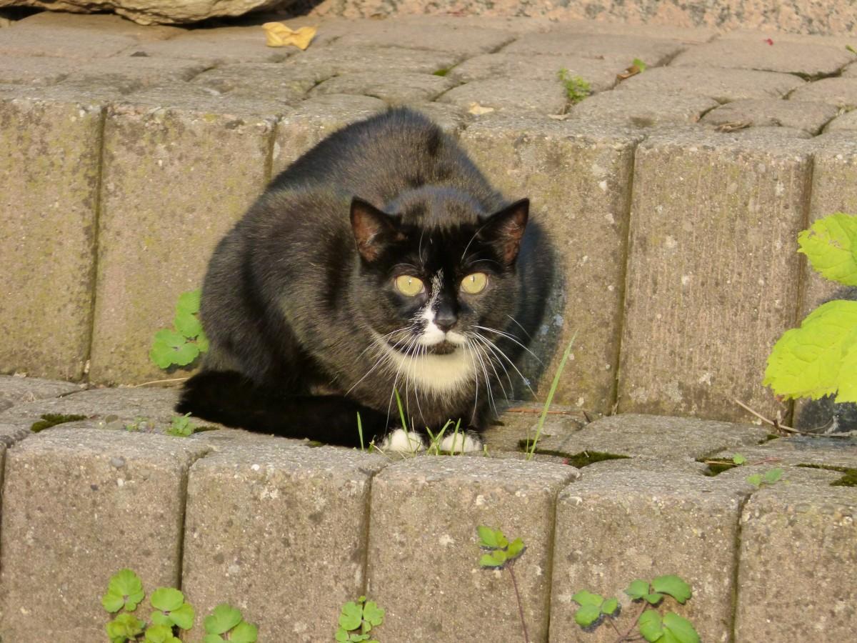 mokré černé kočička pix
