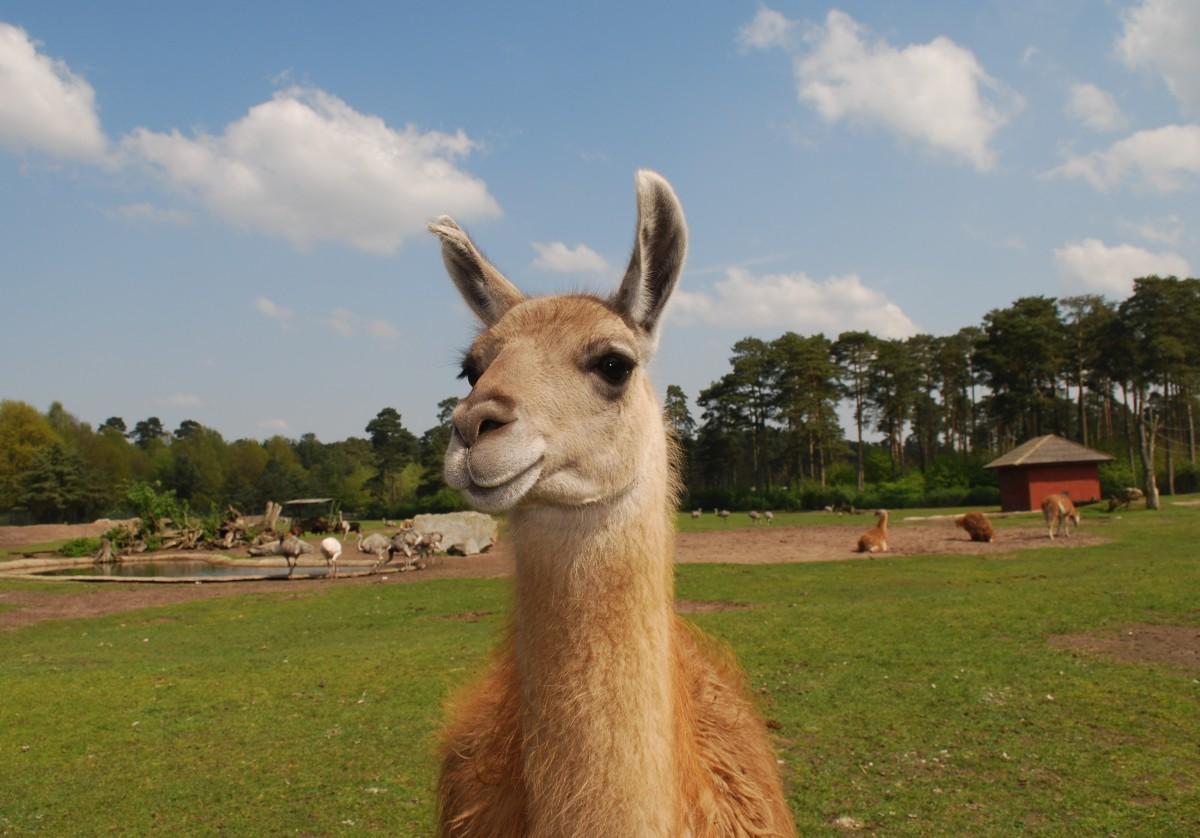 Free Images Nature Mountain Animal Wildlife Zoo
