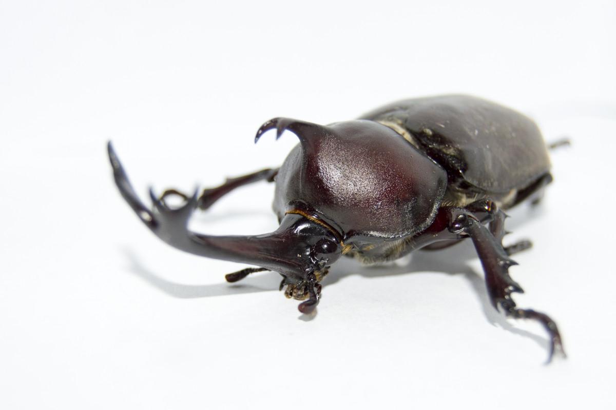gambar hewan serangga fauna invertebrata merapatkan