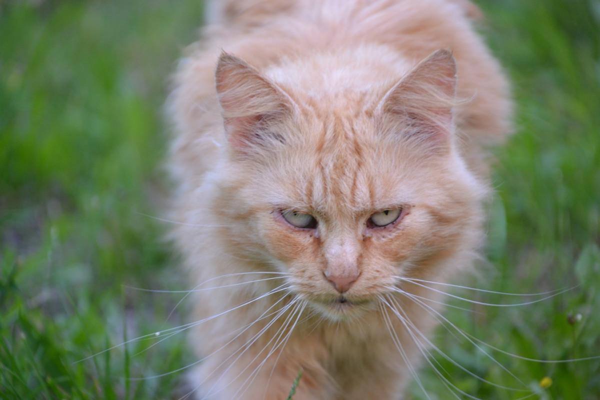 Katze Rote Nase
