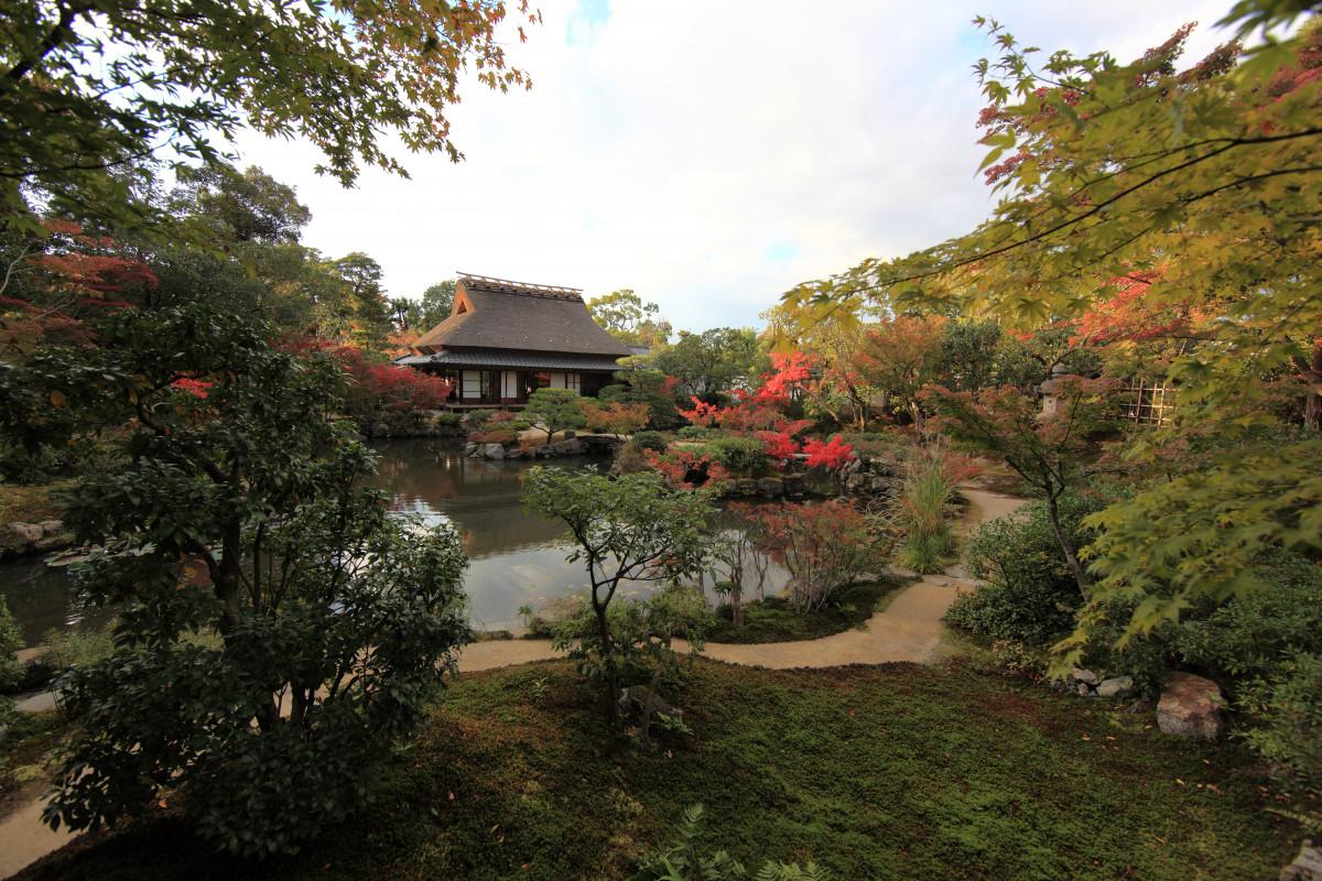Free Images : tree, leaf, flower, high, autumn, park, botany, flora ...