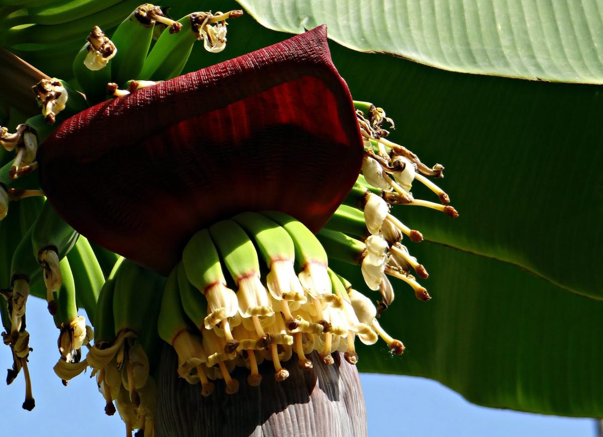 цветы в картинках банан лазер направляется
