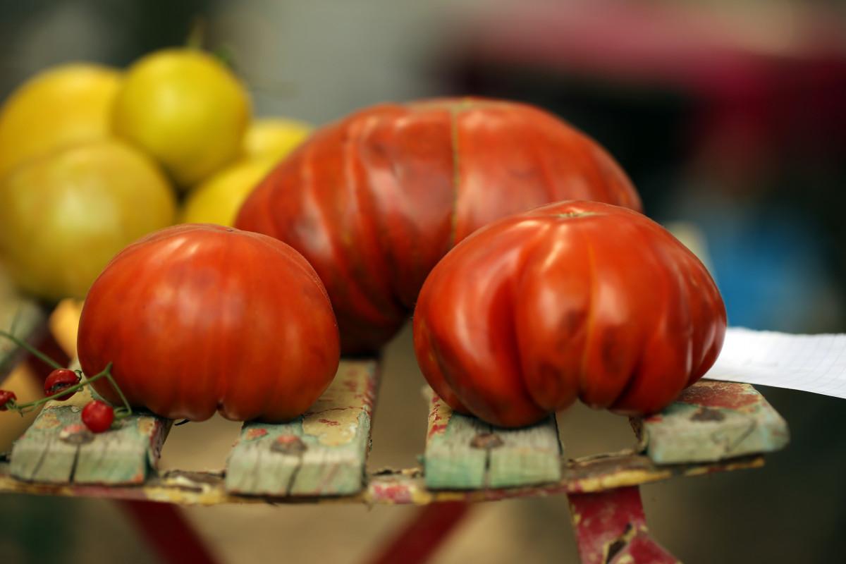 Gambar eropah garis biologi merek produk midi diagram menanam buah bunga eropah makanan merah ccuart Images