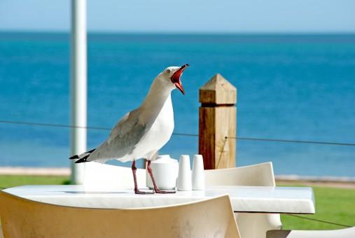 seagull_bird_beak_gull_funny_face_seabird_seaside_charadriiformes-593359.jpg!s