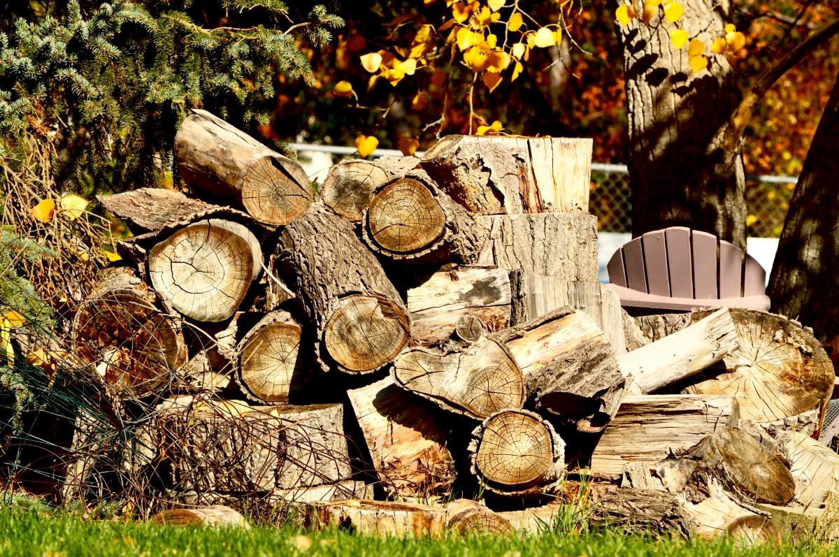Free Images Tree Trunk Bark Firewood Lumber Wood