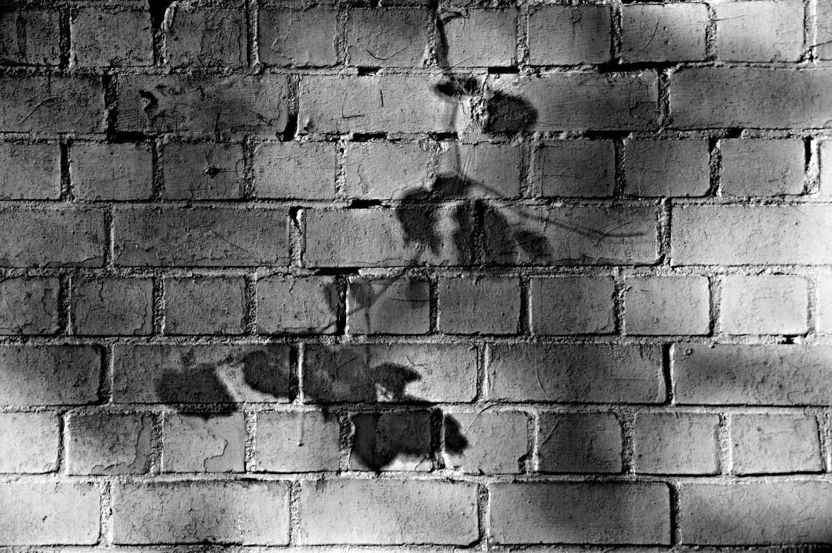 En la sombra del contildeo de la gorda gui00156 - 4 6