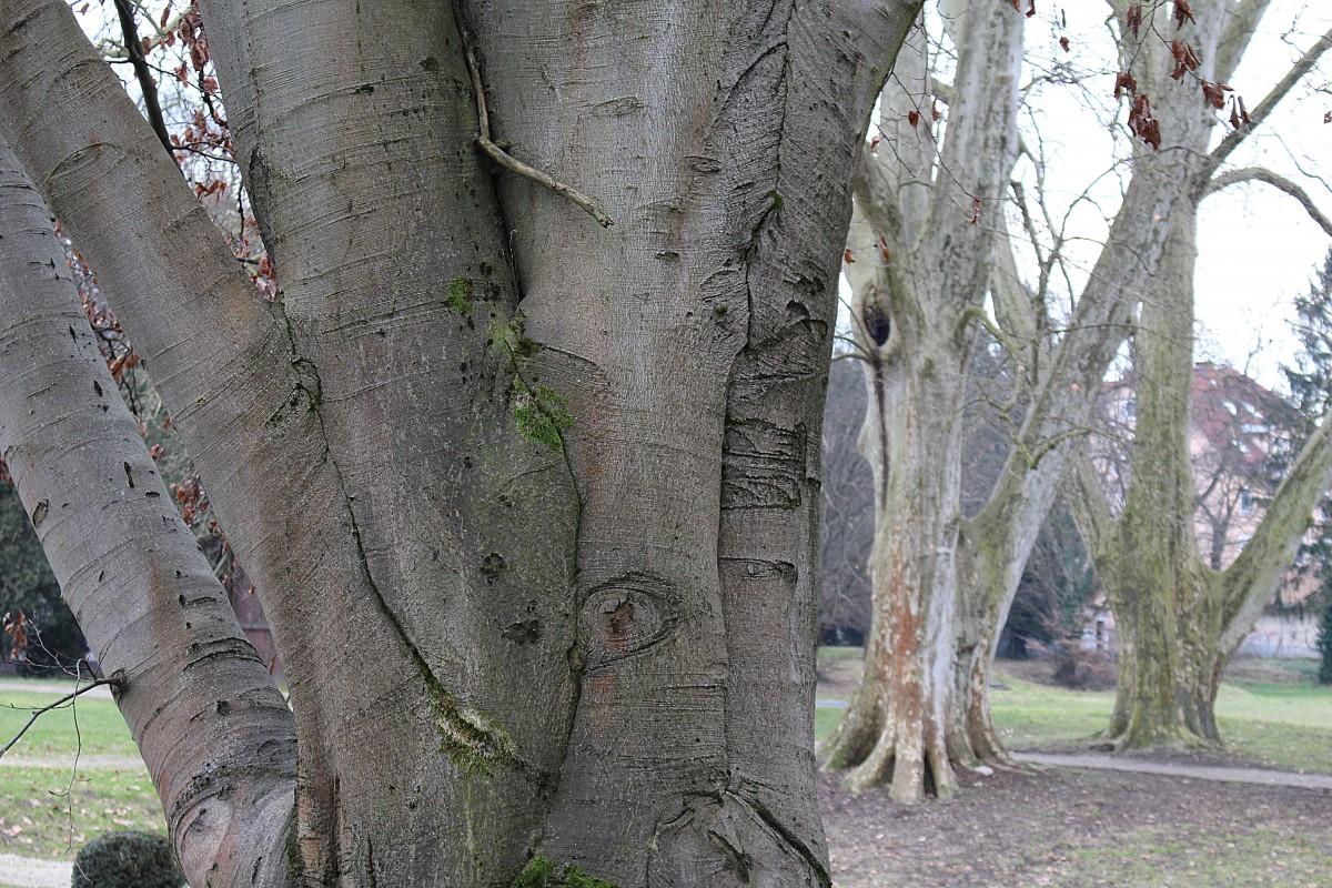 поздравление определить дерево по фото обладаете мало мальскими