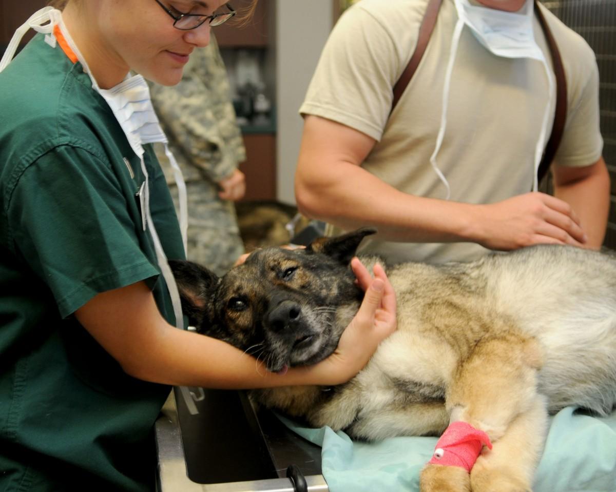 картинка ветеринария