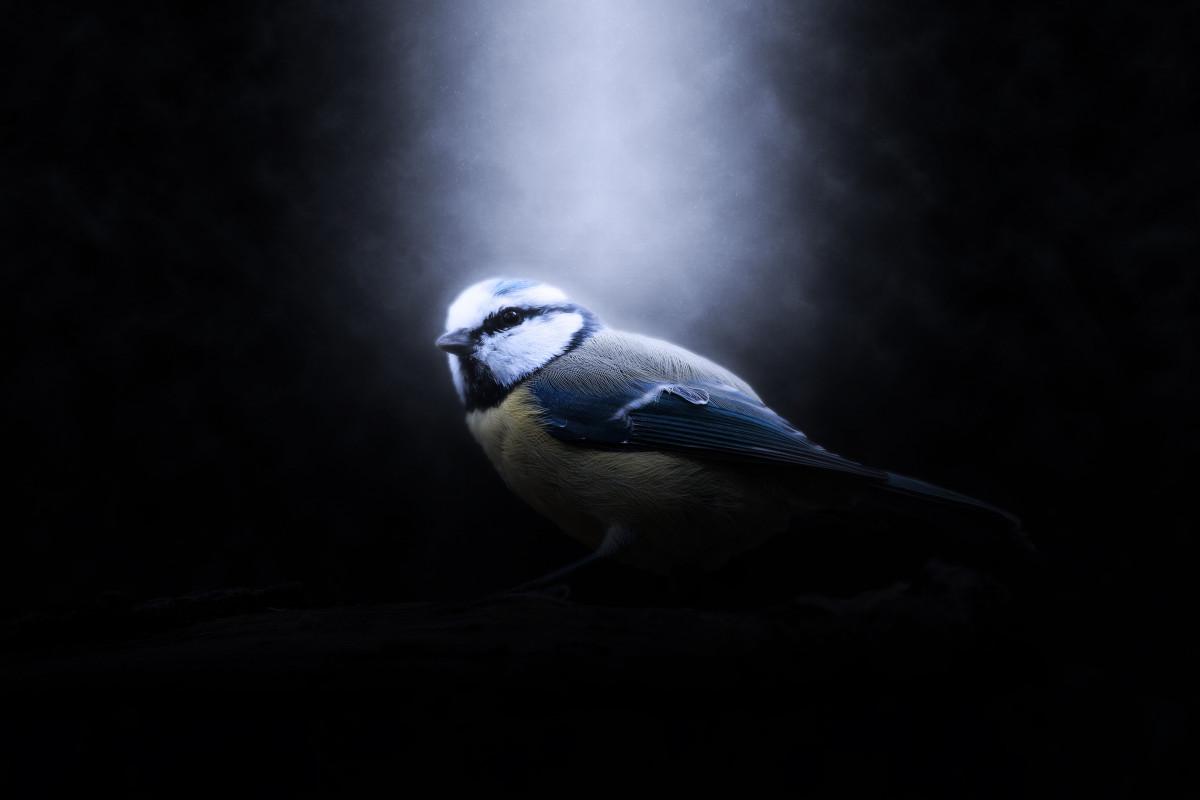 Free Images  Nature, Wing, Cute, Mystical, Dark, Beak, Shadow, Darkness, Garden, Ray -5239