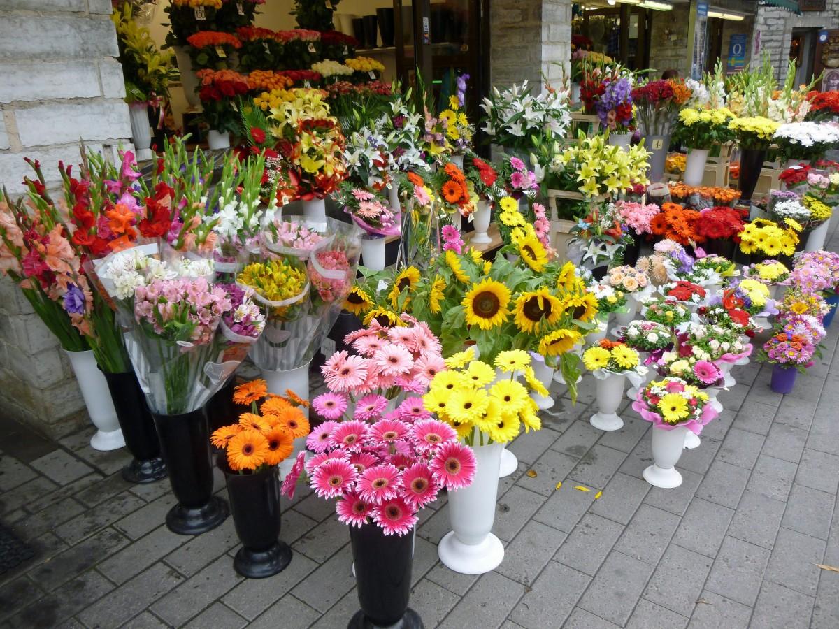 Купить цветы у дачный украина
