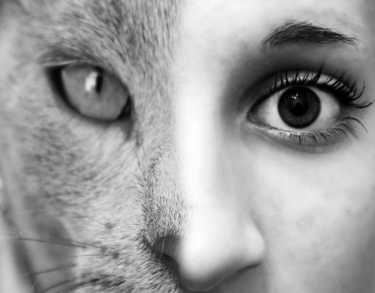 Как сделать лицо наполовину животного