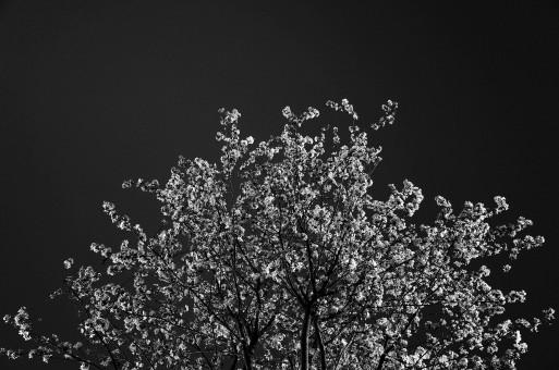 Ngọn Cây Và Màu đen Hình ảnh Hình ảnh đẹp Pxhere