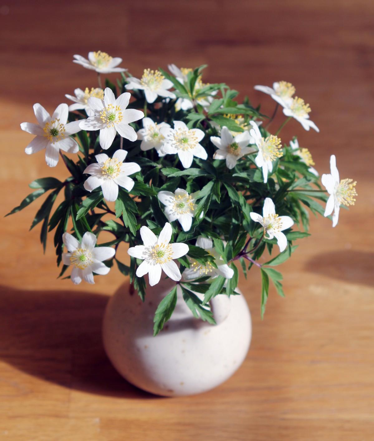 Bakgrundsbilder Vitsippa Blommor Bukett Vas V 229 Rblommor Anemoner V 229 Rblomma Blomma Vit