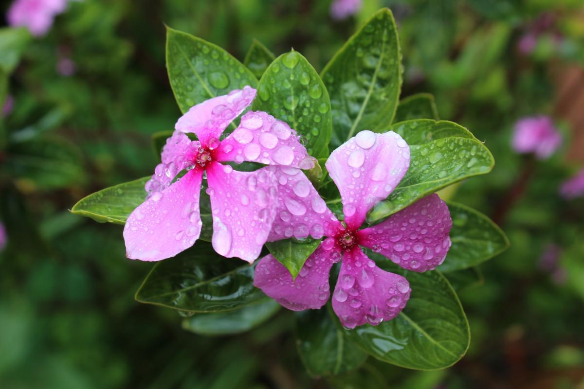Images gratuites fleur vert botanique flore fleur for Plante annuelle