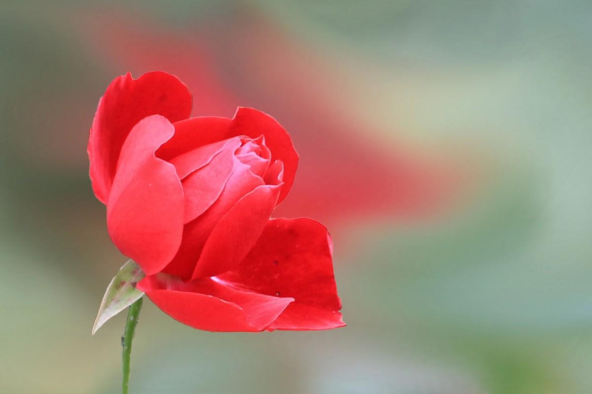 Цвет листьев водяной лилии фото цвету прекрасно