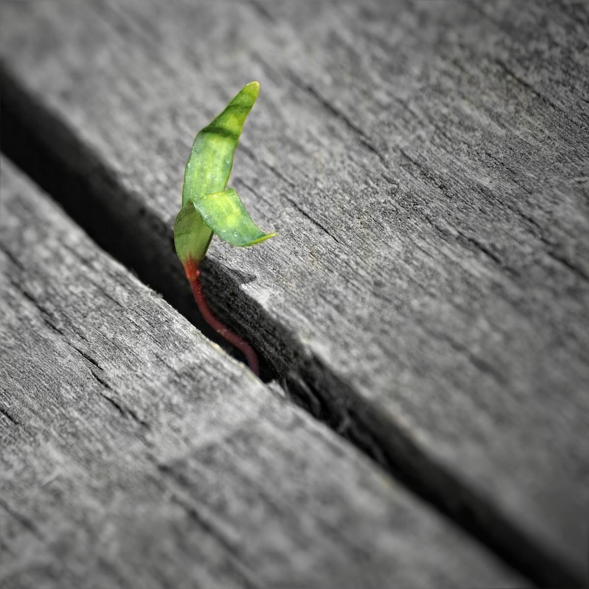 Poesía ecológica, comprometida: solidaria y verde