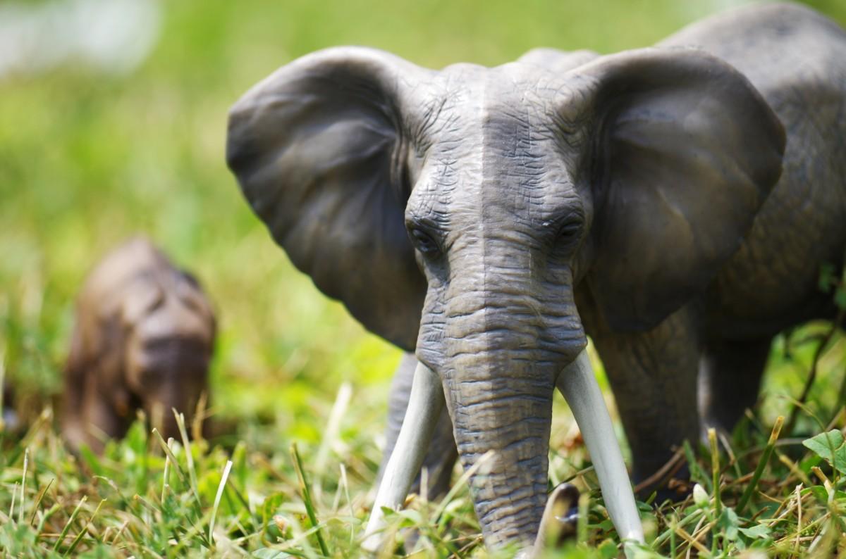 African Elephant Toys For Boys : Stuffed animals cuddly toys melissa doug amazon cuddly