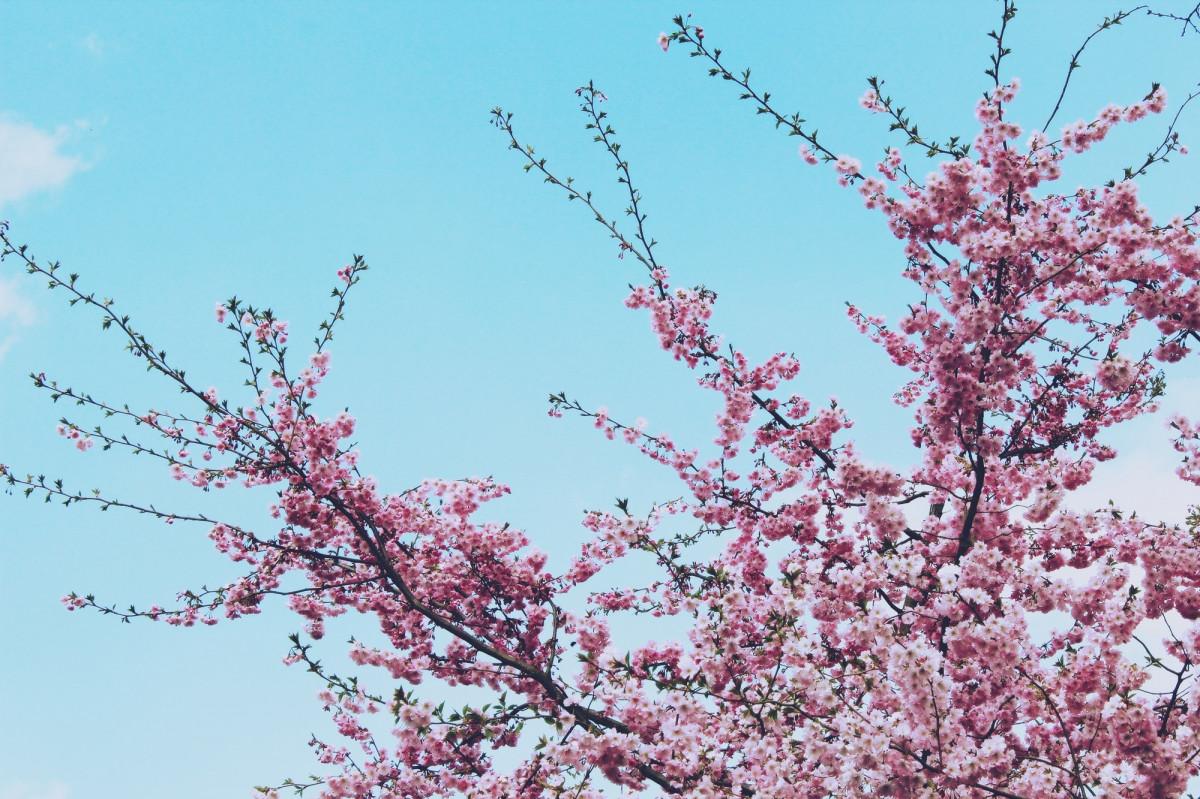 нашей гифки красивые картинки цветение веточки рекомендации как выбрать