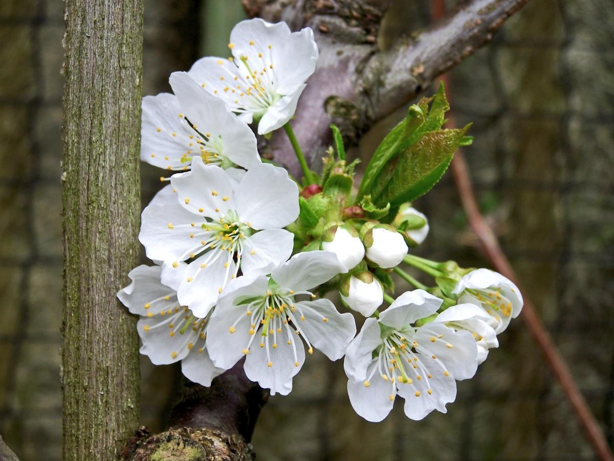 Что посадить на 6 сотках: деревья, растения, кустарники и цветы 28