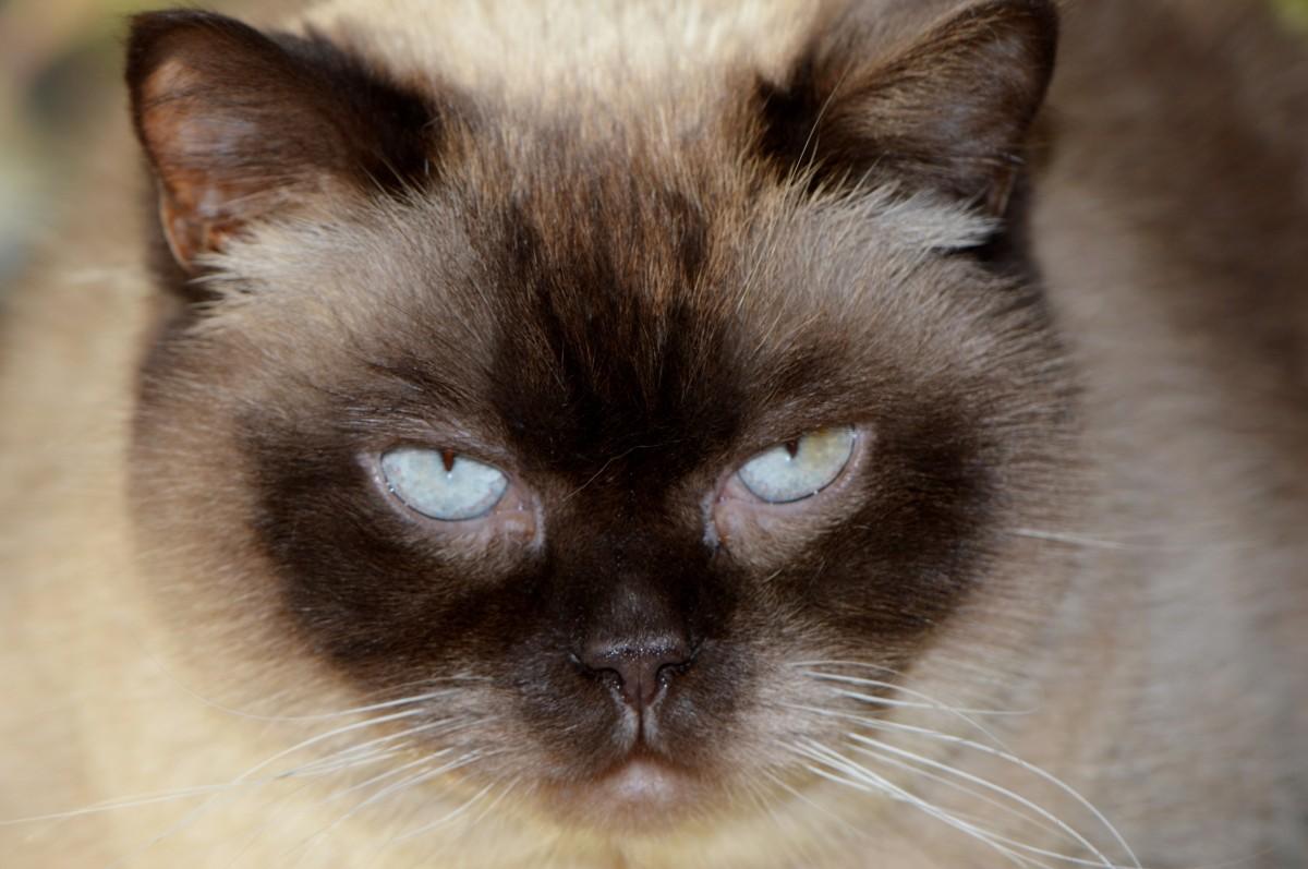 Cat Eye Hair